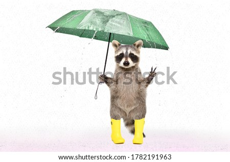 Funny raccoon in rubber boots  under an umbrella in the rain isolated on white background Royalty-Free Stock Photo #1782191963