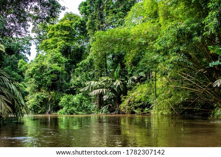 Beautiful lush green tropical forest jungle scenery seen from a boat in Tortuguero National Park in Costa Rica Royalty-Free Stock Photo #1782307142