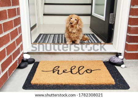 Longhair dachshund sitting in the front entrance of a home. little dog sitting by a door mat that says Hello. Doorway welcome concept.  Royalty-Free Stock Photo #1782308021