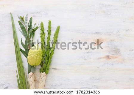 Jewish festival of Sukkot. Traditional symbols (The four species): Etrog (citron), lulav (palm branch), hadas (myrtle), arava (willow) Royalty-Free Stock Photo #1782314366