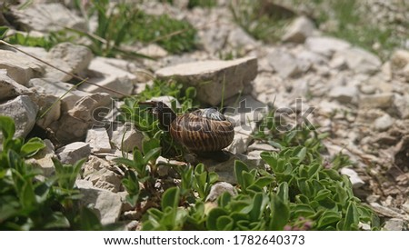 A small slug in the middle of some plants. The picture was taken in the dolomites near the famous three peaks.