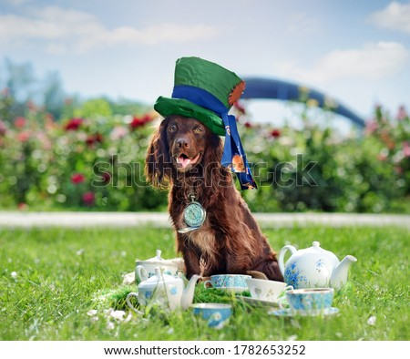 Hppy worker spaniel dressed as Mad Hatter at the tea party #1782653252