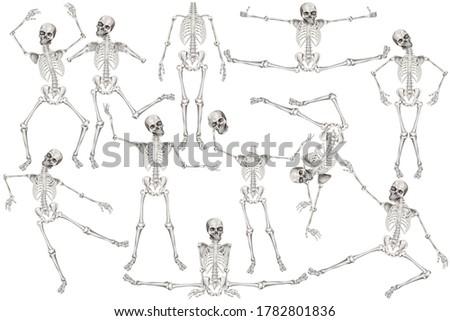 Human skeleton poses. Clip art set on white background