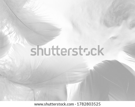 Beautiful abstract black feathers on white background and soft white feather texture on white pattern and dark background, gray feather background, black banners #1782803525