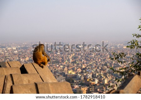 an Assam macaque (Maraca assamensis) monkey looking out over the city of Kathmandu, showing urban sprawl and potential habitat loss and adaptations exhibited by primates. Swayambhunath, Kathmandu. #1782918410