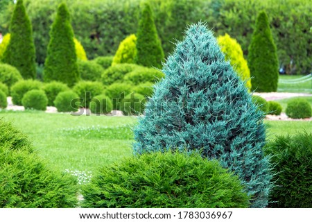 greenery landscaping of a backyard garden with evergreen thuja in a summer park with decorative landscape design close up details, nobody. Royalty-Free Stock Photo #1783036967