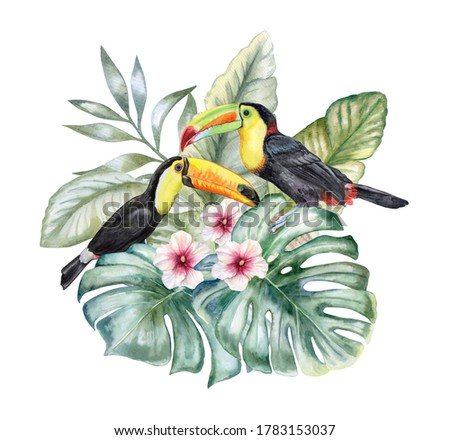 Rainbow toucans tropical bird in exotic tropical leaves, plants and flowers. isolated on white background. Realistic watercolor. Illustration. Floral set. Template. Clip art. Hand drawn. Hand painted