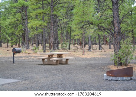 Bonito Campground recreation site, surrounded by Ponderosa Pine Trees, Flagstaff, Coconino County, Arizona