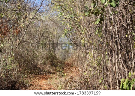 Trail with dry vegetation and trees in the midst of drought. #1783397159