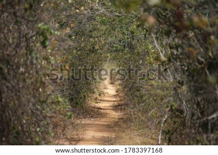 Trail with dry vegetation and trees in the midst of drought. #1783397168