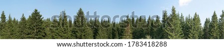 Panorama of green coniferous forest. Blue sky with a small cloud. Royalty-Free Stock Photo #1783418288