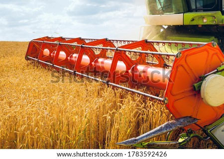 Combine harvester harvests ripe wheat. Ripe ears of gold field on the sunset cloudy orange sky background. . Concept of a rich harvest. Agriculture image #1783592426