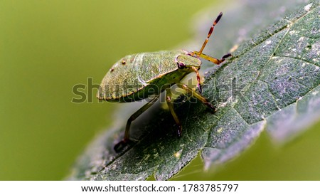 A green stink bug sits on a leaf. The picture is stacked.