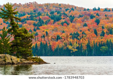 View at the forest in Algonquin Park in Ontario. Picturesque fall colors on trees.