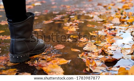 Wide picture of a woman`s boot stepping into the pool on the road in autumn with many colorful leaves. Concept of a rainy autumn