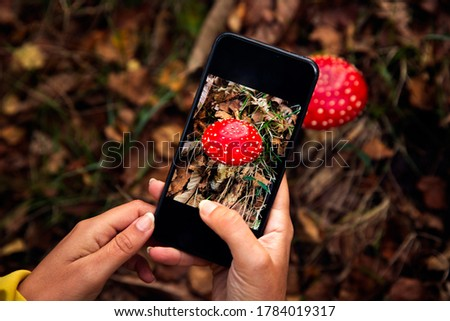 Female hands taking a picture to a mushroom