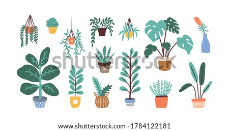 Set of different tropical house plant. Ficus, monstera, protea, pellaea, succulent in various pot, vase. Scandinavian cozy home decor. Flat vector cartoon illustration isolated on white #1784122181