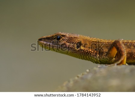 Picture of reptile and its background is black.