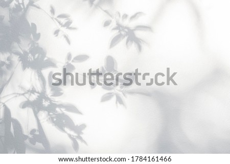 Leaf shadow on wall. Nature tropical leaves tree branch and plant shade with sunlight from sunshine dappled on white wall texture for background wallpaper and any design