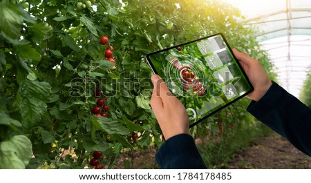 A farmer is holding a tablet on the background of a greenhouse with tomatoes. Smart farming and precision agriculture 4.0 #1784178485