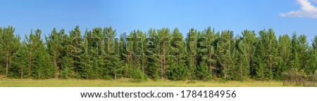 Panorama of the forest of pine trees, fir trees and shrubs. Blue sky with cloud. Concept - summer landscape for decoration. Royalty-Free Stock Photo #1784184956