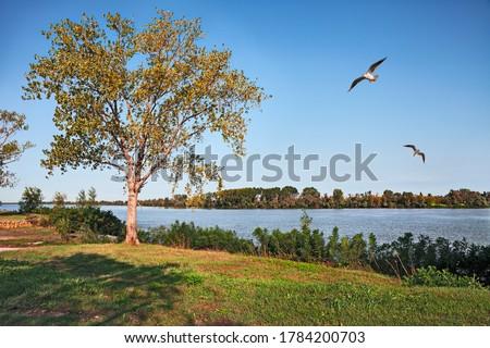 Porto Tolle, Rovigo, Veneto, Italy: Po Delta Park landscape on the river bank of the Po di Venezia