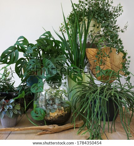 Interior with plants in living room with decorations on the table Stylish composition of home garden plants industrial green interior. Urban jungle interior with houseplants. Green concept. Royalty-Free Stock Photo #1784350454