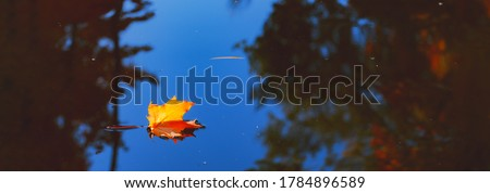 Autumn cold rainy day. Yellow orange maple leaf floating in lake. Vibrant color of fall season of nature. Calm forest park. Reflection of blue sky in clean water surface of pond. Tranquil zen concept. Royalty-Free Stock Photo #1784896589