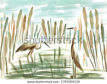 Herons in a swamp with reeds. The illustration was done in watercolor. Illustration for postcards, for children's books.