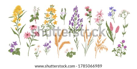 Collection of different medical herbs, wild flower or treatment plants in realistic, natural style. Botanical, decorative wildflowers. Flat vector hand drawn illustration isolated on white background #1785066989