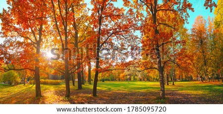 Autumn forest landscape. Gold color tree, red orange foliage in fall park. Nature change scene. Yellow wood in scenic scenery. Sun in blue sky. Panorama of a sunny day, wide banner, panoramic view.