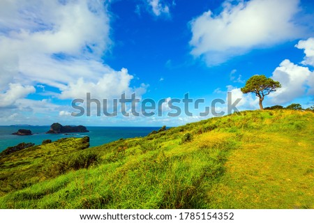 Hills with yellowed grass and a lone tree. Pacific Ocean, New Zealand. Road to the Cathedral Cove on the North Island. The concept of active, exotic, ecological and photo tourism