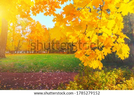 Autumn yellow leaf closeup. Bright orange maple tree. Blur bokeh on background. Golden color flora in park. Light sunny october day. Shiny red fall leaves in garden Sun in sky. Change of nature season