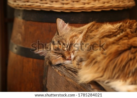 A cute cat sleeping on a wooden chest.