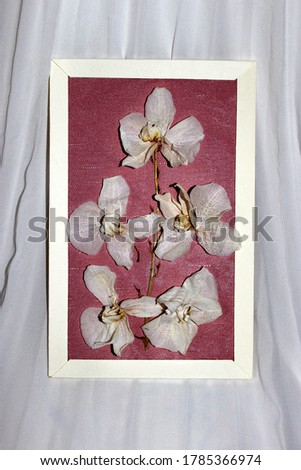 A picture with dry flowers from a white orchid. The frame is white with a matte pink background. The photo is taken on a white background.