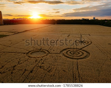 Mysterious crop circle in oat field near the city at the evening