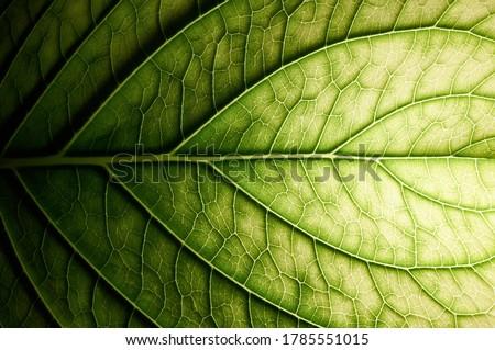 Hydrangea. Vessels of green leaf. Royalty-Free Stock Photo #1785551015