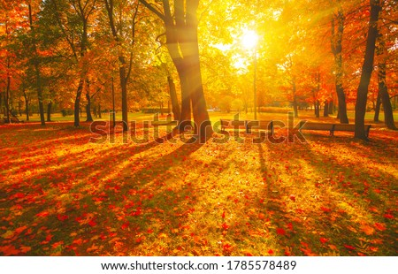 Autumn forest path. Orange color tree, red brown maple leaves in fall city park. Nature scene in sunset fog Wood bench in scenic scenery Bright light sun Sunrise of a sunny day, morning sunlight view. Royalty-Free Stock Photo #1785578489