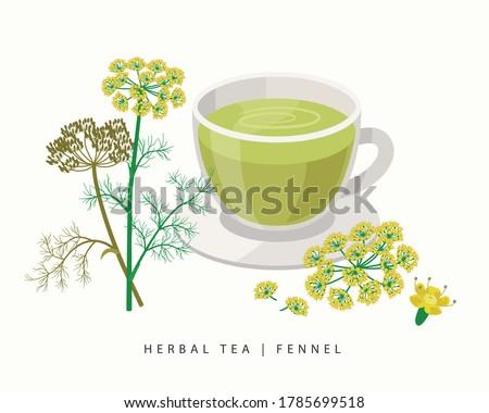 Fennel herbal tea isolated on white background. Flowering Plant vector botanical illustration. Royalty-Free Stock Photo #1785699518