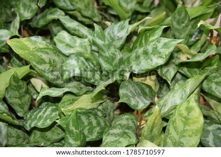 Nature Pics of different type of aleovera, leafs plants