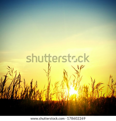 Toned photo of grass in the sunset light #178602269