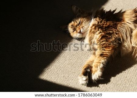 A Persian cat sleeping in the sunshine to keep warm.