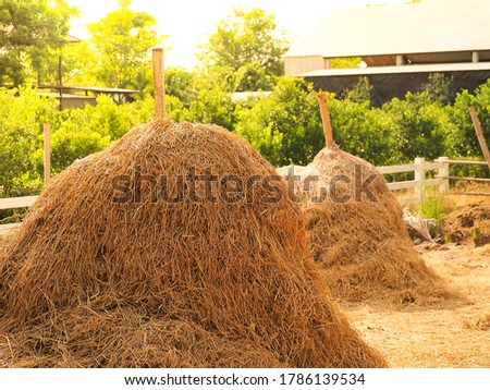 Hay straw, a bale of hay group. Agriculture farm and farming symbol of harvest time with dry grass (hay),  hay pile as a mountain of dried grass haystack. #1786139534