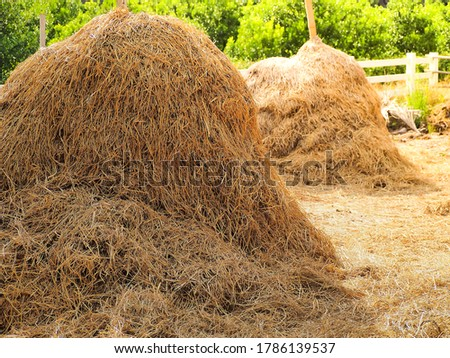 Haystack, a bale of hay group. Agriculture farm and farming symbol of harvest time with dry grass (hay),  hay pile as a mountain of dried grass hay straw. #1786139537