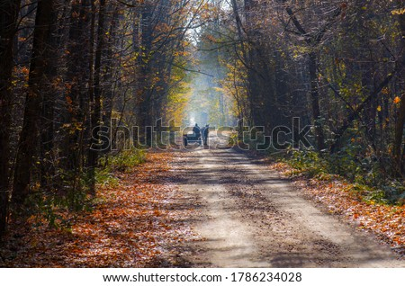 Ride in a horse drawn wagon in autumn woods with yellow leaves. Horse carriage on on autumn road Royalty-Free Stock Photo #1786234028