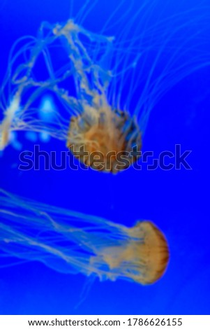 Blur picture  of two jellyfish with blue background