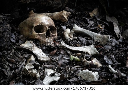 The skull and pile of bone on decay leaf in pit the old graveyard whith has dim light and dark  / Select focus, Still life image Royalty-Free Stock Photo #1786717016