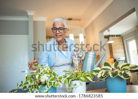 Senior Woman With Green Plants and Flowers at home. Woman Caring for House Plant. Woman Taking Care of Plants at Her Home Portrait of Elderly Woman Gardening at Home. Retired Female Care for Her Plant #1786823585