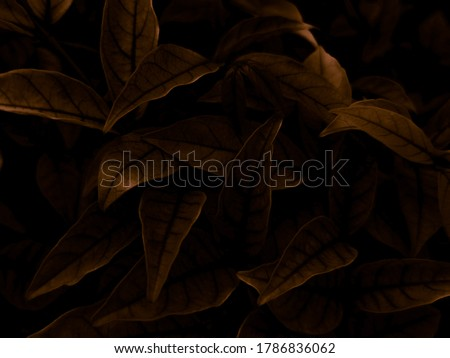 Beautiful abstract color brown and yellow flowers on dark background, orange flower frame and brown leaves texture, brown background, orange and gold love banner, orange isolated, dark leave texture Royalty-Free Stock Photo #1786836062