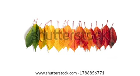 Autumn creative composition. Colorful leaves on white background. Fall leaves. Autumn background. Flat lay, top view, copy space #1786856771